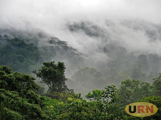 A view of Rwenzori National Park shrouded in mist