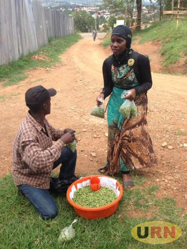 A resident buying nsenene in Masaka town.  Many nsenene dealers harvest the delicacy using power