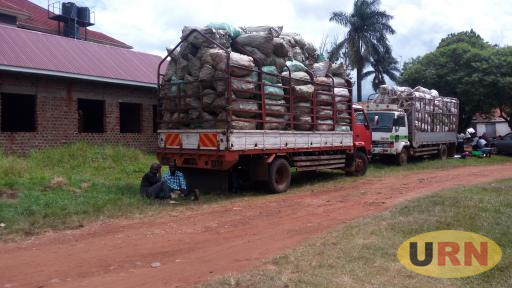 The two trucks of cassava parked at the Jinja district headquaters.