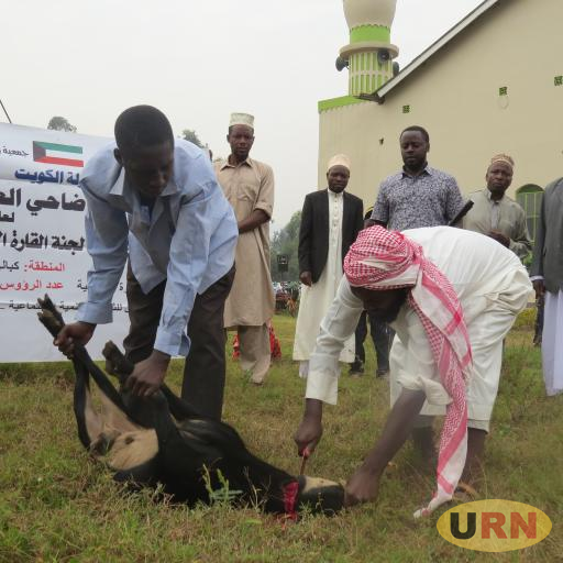 Some Muslims slaughtering a goat after Eid al-Adha prayers at Kirigime Mosque