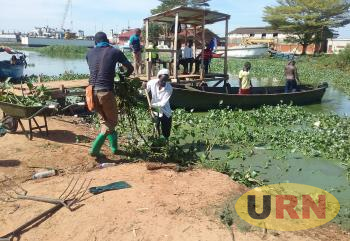 Fishermen at Port Bell landing site remove water hyacinth