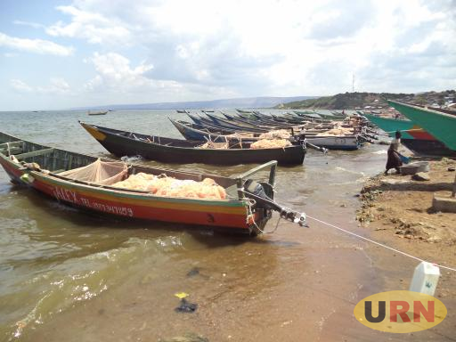 Fishing boats at Kaiso Landing site in Hoima district